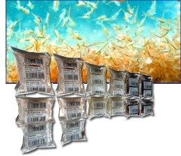 Lebende Weiße Mückenlarven 500g lose Ware