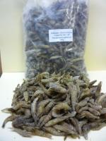 Sandgarnelen (Crangon crangon) gemischt lose im Beutel 500g