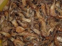 Sandgarnelen (Crangon crangon) gekocht 500g